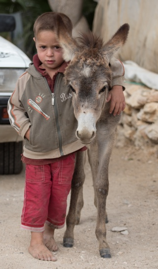 boy and donkey a seefer